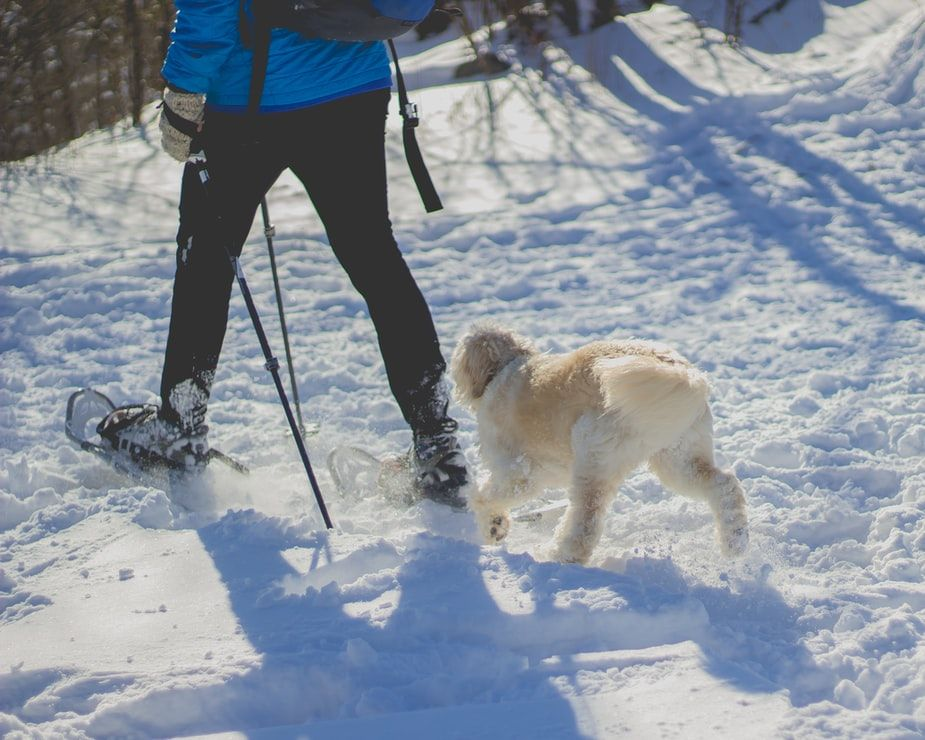 adult and dog snowshoeing